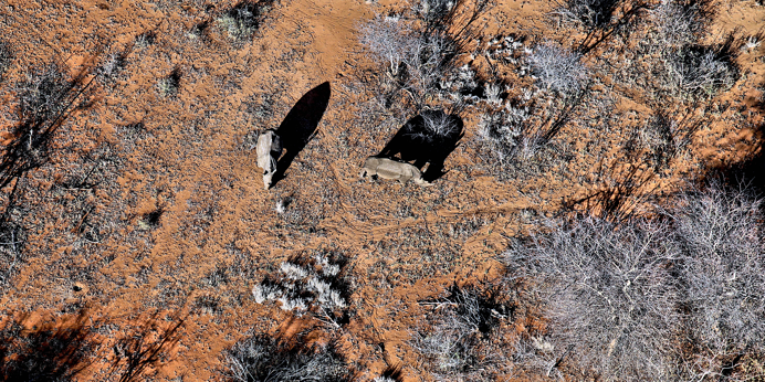 How drone technology is supporting conservation efforts